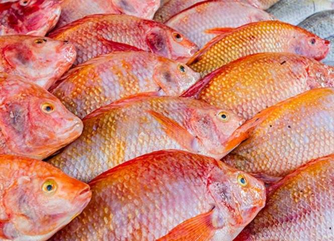 foodware 365 fish